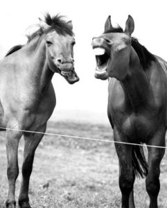 Two laughing Horses by Walter Sittig