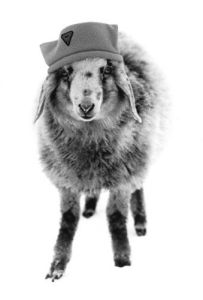 Sheep in winter hat by Gerd Pfeiffer