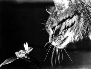Cat looking at a frog prince by Rüdiger Poborsky