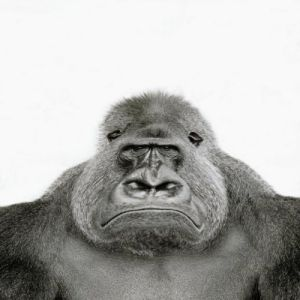 Angry gorilla by Walter Sittig