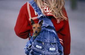 Girl with a dog in her backpack by Gerd Pfeiffer