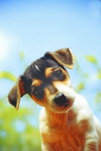 Puppy I by Heinz Krimmer