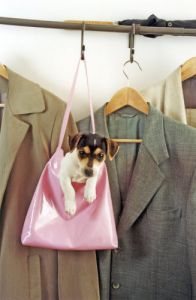 Jack Russell in the wardrobe by Heinz Krimmer