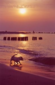 Dog on a beach III by Heinz Krimmer