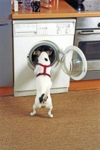 Dog looking inside a washing machine by Heinz Krimmer