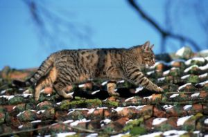Cat on a roof by Gerd Pfeiffer