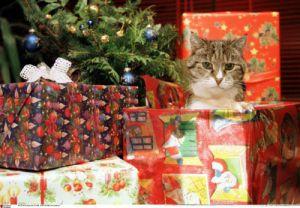 Christmas cat by Keystone