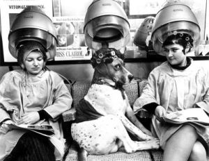 Dog and women relaxing under drying hoods by John Drysdale