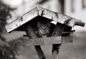 Cat hiding in a birdhouse by Manfred Grohe