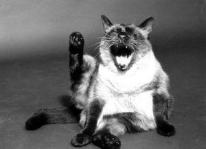 Cat yawning by Ingrid Schilling