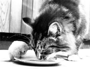 Cat and mouse eat together by John Drysdale