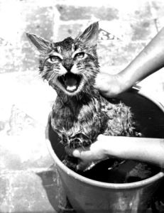 Angry cat gets a bath by Frans Stoppelman