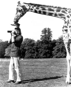 Giraffe stealing a photographer's hat by John Drysdale