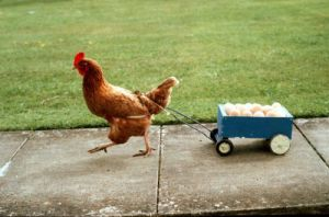 Hen pulling a cart of eggs by John Drysdale
