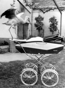 Stork standing on a pram by Kurt Pollak