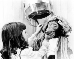 Girl beautifying a chimp by John Drysdale