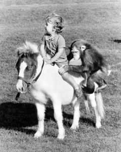 Chimp and child on horseback by John Drysdale