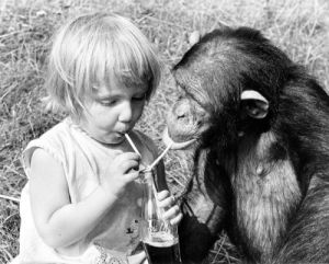 Girl and chimpanzee share a cola by John Drysdale