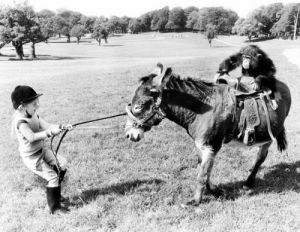 Chimp riding a stubborn donkey by John Drysdale