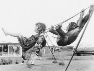 Girl and chimp swinging by John Drysdale