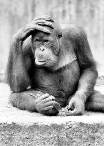Ape with hand on head by Walter Sittig