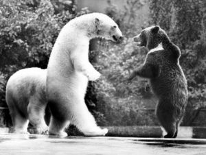 Polar bear greets brown bear by Gernot Rekort