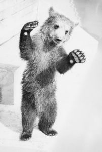 Little bear posing by Walter Sittig