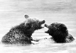 Two bears playing in the water by Winfried Glatten