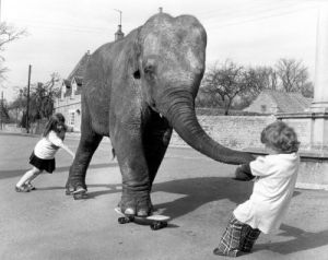 Children pull elephant on skateboard by John Drysdale