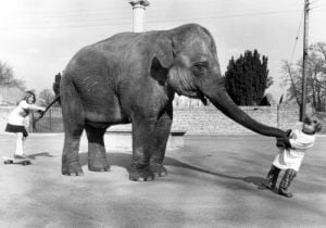 Kids pulling on both ends of an elephant by John Drysdale