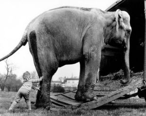 Child pushing an elephant by John Drysdale