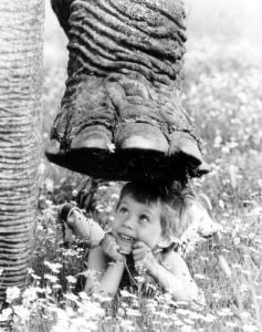 Elephant stepping over a little boy by John Drysdale