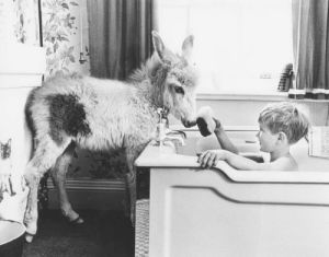 Donkey in the bathroom by John Drysdale