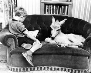 Donkey and boy on a sofa by John Drysdale