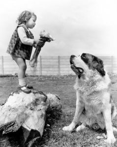 Girl teasing St. Bernard with a huge bone by John Drysdale