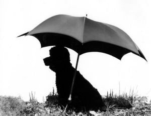 Dog under an umbrella by Jerzy Proppe