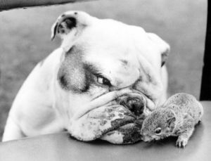 Dog and hamster by John Drysdale