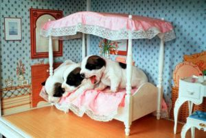 Three puppies waking up in the dolls house by John Drysdale