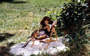Little dog in a tiny deck-chair by Alexander Schuhmacher