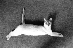 Cat stretching by Anonymous