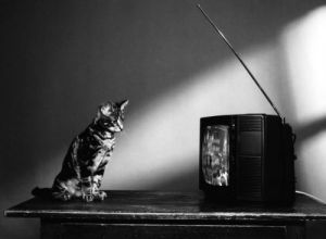 Cat watching television by Alfred Raschke
