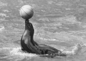 Seal with a ball by Walter Sittig