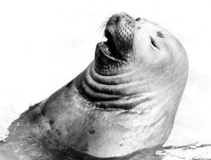Seal by Walter Sittig