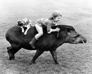 Riding on a tapir by John Drysdale