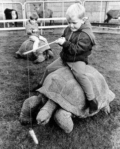 Boys riding tortoises by John Drysdale
