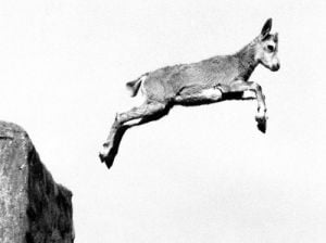 Ibex leaping from a rock by Walter Sittig
