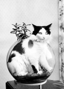 Guilty cat stuck in the goldfish bowl by Panin-Tschubatjuk
