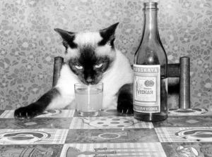 Cat with vodka by Panin-Melnikov