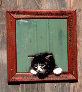 Kitten looking through window by Bernd Schellhammer