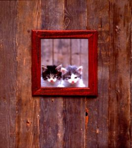 Kittens at window by Bernd Schellhammer